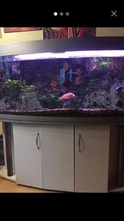 Aquarium 500Liter mit gewölbter Frontscheibe