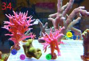 Meerwasser Ableger Update 2 3
