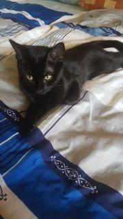 schwarzes katzenbaby 4