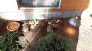 Verkaufe 5 weibliche griechische Landschildkröten
