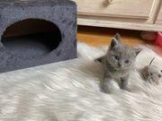 Katzenbaby - Mädchen - Blue