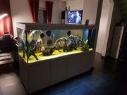 Aquarium 1000Liter mit Besatz