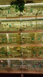 Vogelkäfige für professionelle Züchtung