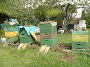 Bienenvölker Buckfast Carnica auf 11