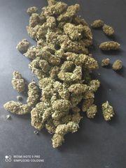 CBD Aromablüten Legal
