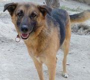 Emma - sanfte und soziale Hundeseele