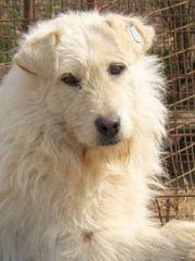 Hunde In Oranienburg Kaufen Und Verkaufen Bei Quoka De