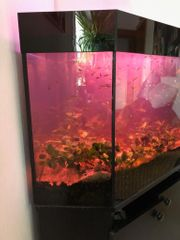 Aquarium 280l EHEIM Pro3 Zubehör