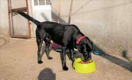 Hunde - BLACKY sucht sein Traumzuhause