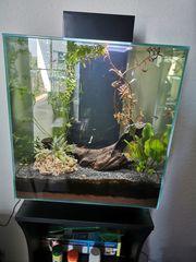 Fluval Edge 2 0 Aquarium