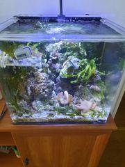 20-25 Kilo Lebendgestein mit Korallen