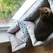 2 Katzen (BKH/