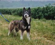 Traumhund Bella sucht eine liebe