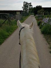 Reitbeteiligung Western Pony