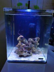Meerwasser Meerwasseraquarium Aquarium Dennerle Nanocube