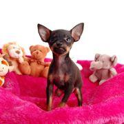 Frecher*Mini Wachhund*