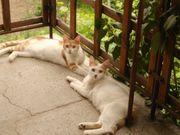 Katzen Smilla und Grace warten
