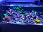 Korallen - SPS LPS Rhein-Main - Update