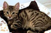 Kitten und Mama suchen Schmusepartner