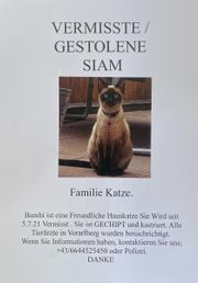 Vermisst Gestohlene Siam Katze