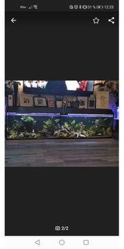 Aquarium Deko Besatz 600l