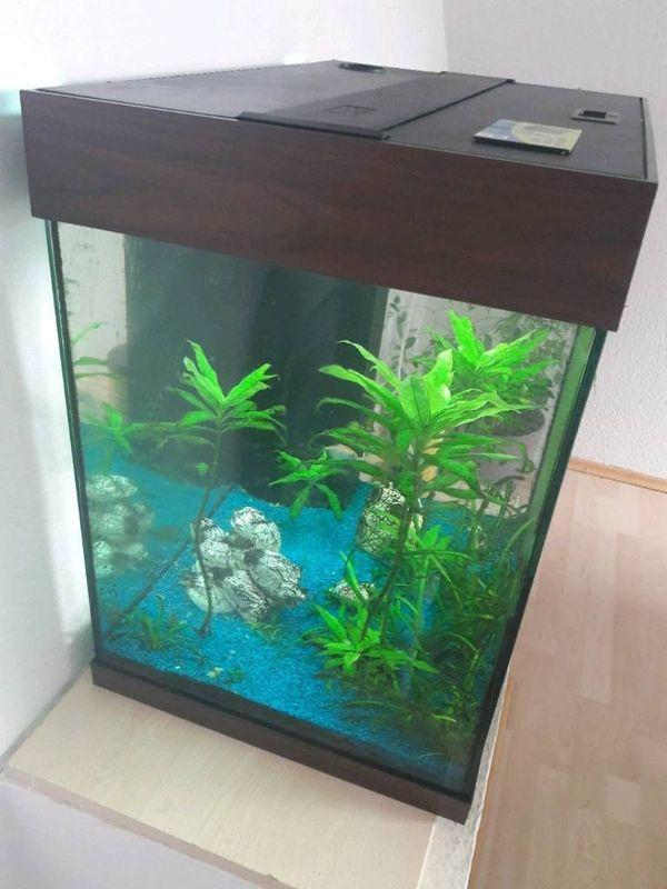 Aquarium Von Juwel 80x80 Cm In Zapfendorf Fische Aquaristik