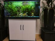 Aquarium 250 L mit Fische
