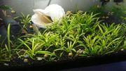 Aquarium Pflanzen und schnecken