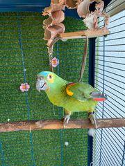 verkaufen meinen papagei