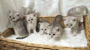 Babykatze zu verschenken