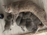 Liebe volle kitten