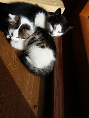 Kleine Kätzchen zu verschenken