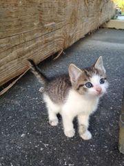 Katze Zu Verschenken In Furstenfeldbruck Tiermarkt Tiere