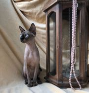 Katze Cristy