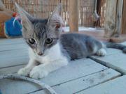 Rena wunderschönes Kittenmädchen ca 3