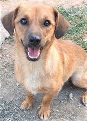 Dylan - Gute-Laune-Hund sucht schönes Zuhause