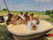 Kaninchen Hasen Jungtiere Babys