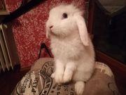 Tolle Kaninchen Babys abzugeben