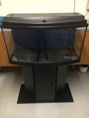 Aquarium Panorama MP gewölbte Frontscheibe