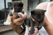 2 Kitten suchen liebevolles Zuhause