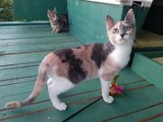 Pixie abenteuerlustiges Katzenmädchen ca 5