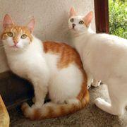 Katzenmädels - Smilla und Grace suchen