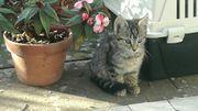 Kätzchen suchen tierliebes Zuhause