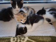 Katzenkitten auf Suche nach liebevollen