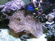 Suche Zubehör für Meerwasseraquarium