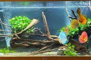 Komplett Aquarium mit Besatz und