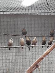 verschiedene Vögel Sittiche und Exoten