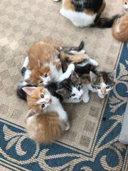 4 süße Katzenbabys suchen ein