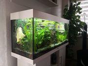 Aquarium Juwel 240l mit Unterschrank