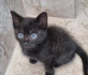 zuckersüsses schwarzes baby mit blauen